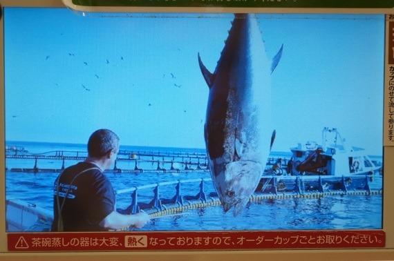 sushiro_jumbo_nama_hon_maguro_41_sh